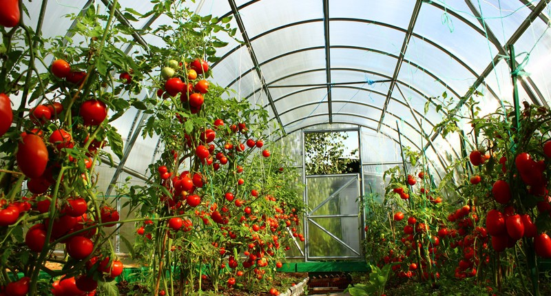 Greenhouse Agriculture3